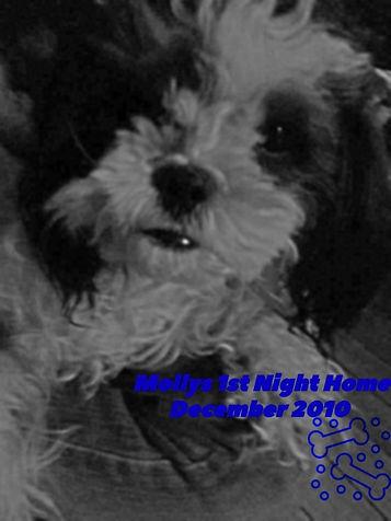 Mollys 1st Night Home #shihpoo #loveatfirstsight #vanlife #Rvlife #Rvliving #roadtrip #travel #blog #wanderlust #lovelife #pupontheroad #chasinghappinessandsparksofmagic #nomad #canada #vagabond #liveyourbestlife   #explorecanada #vanliving #boondocking #VanLifeDreams #bestwoof