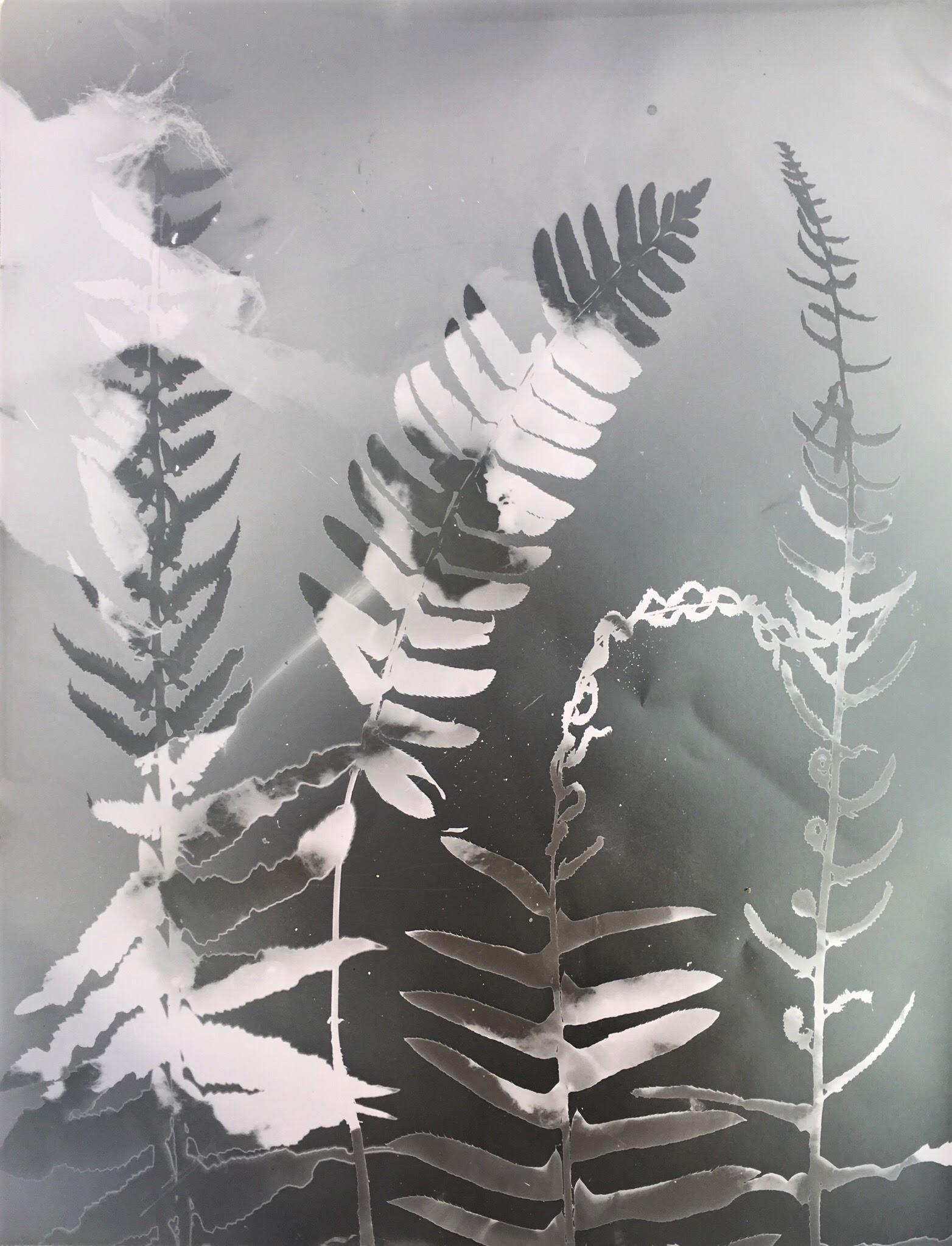 Fernscape