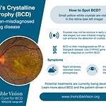BCD flyer_202005.png