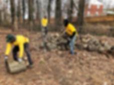 2.7.19 tree removl - stumbs.jpg