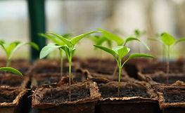 02 seedling-Image by J Garget from Pixabay.jpg