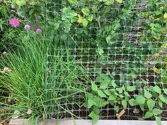 06 companion planting.JPG