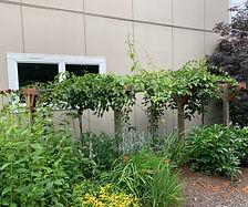 06a Structure for Vertical Garden_edited.jpg