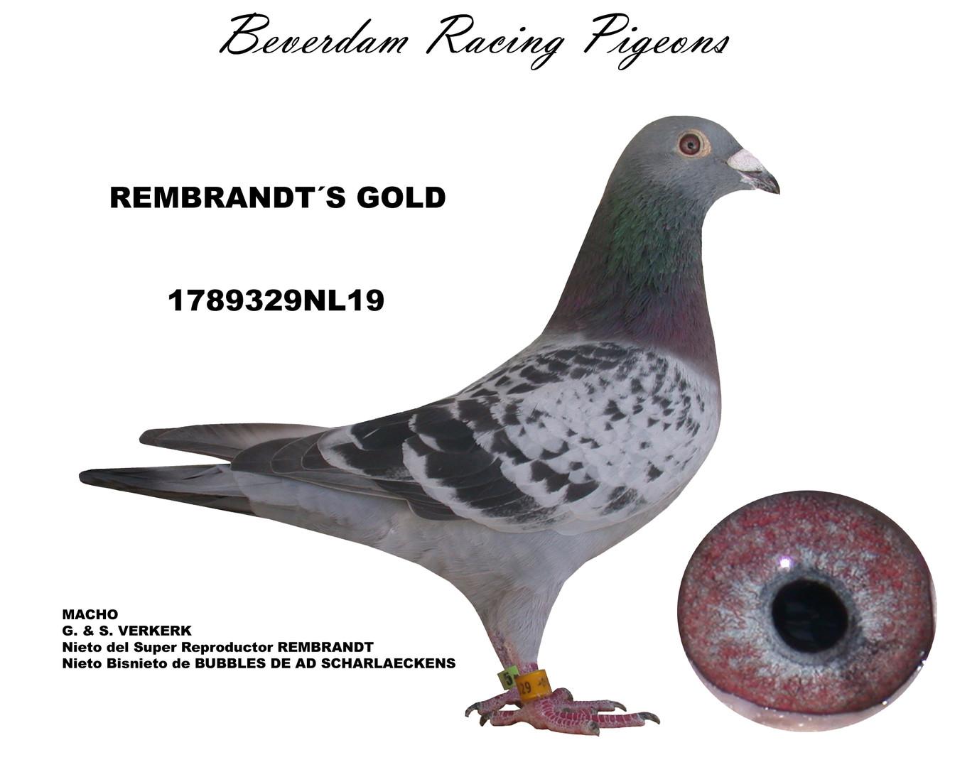 NL19-1789329BL19 term.jpg