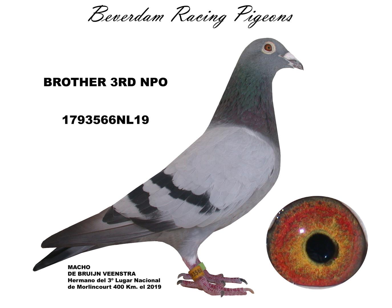 NL19-1793566 term.jpg