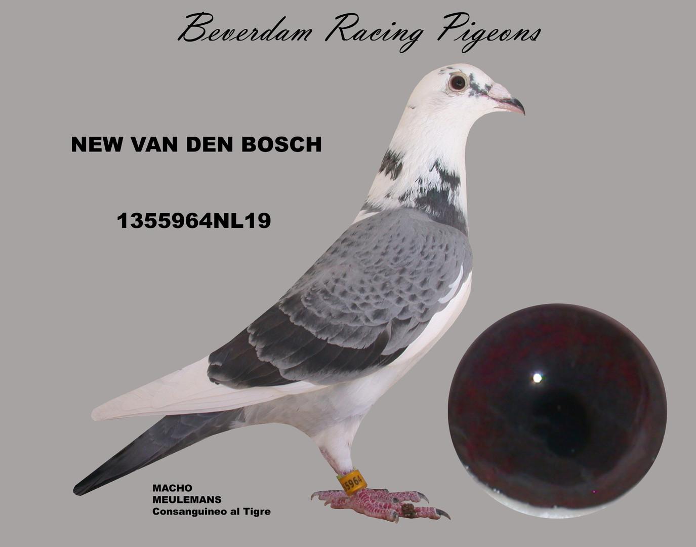 NL19-1355964NL19 term.jpg