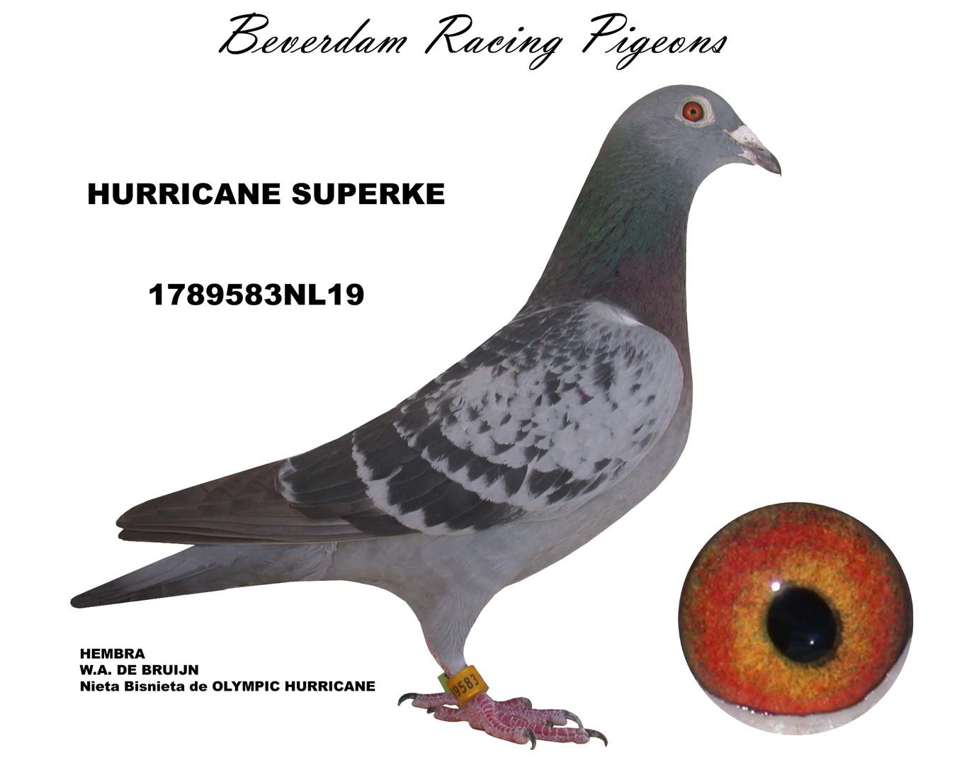 NL19-1789583 term.jpg