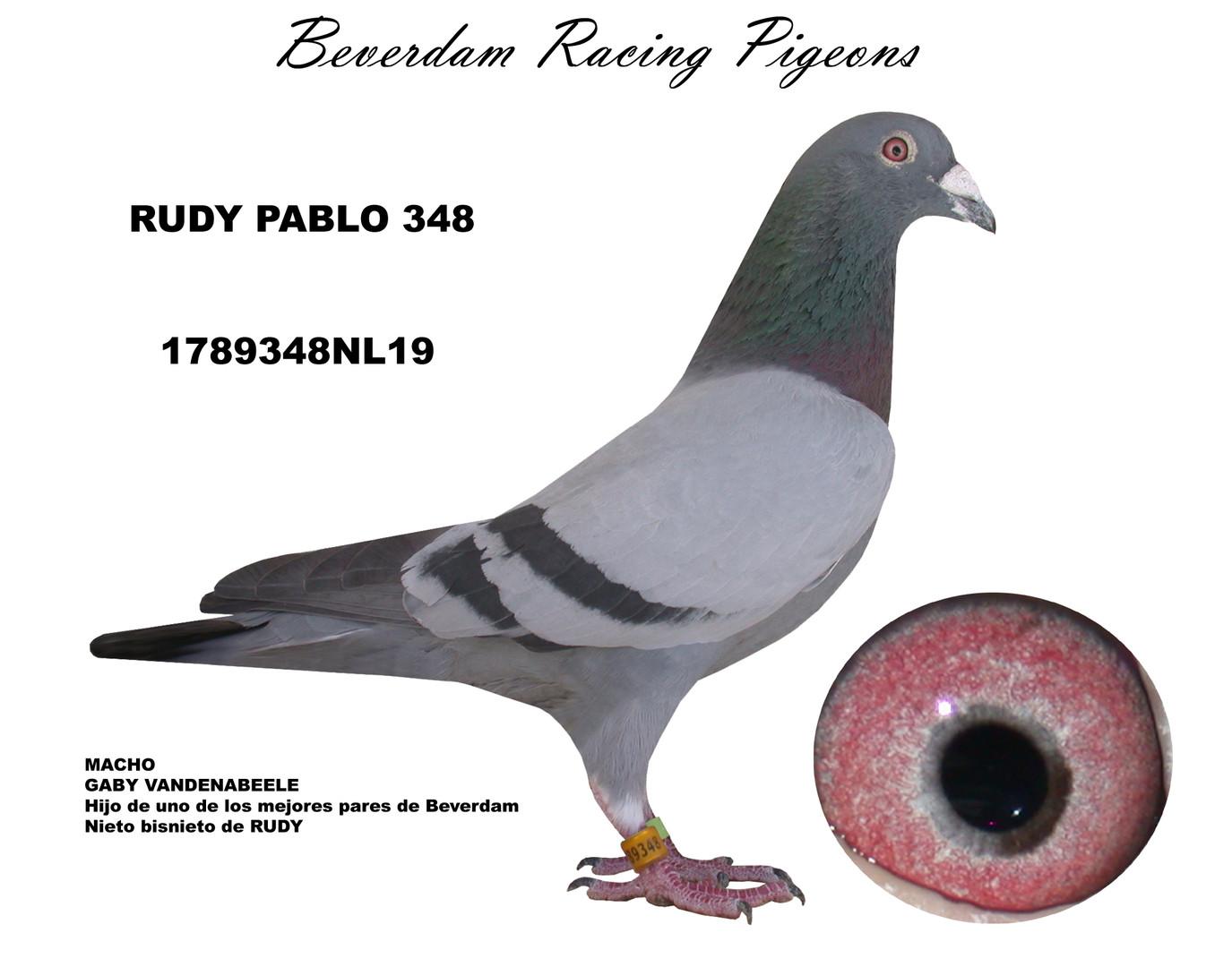 NL19-1789348NL19 term.jpg