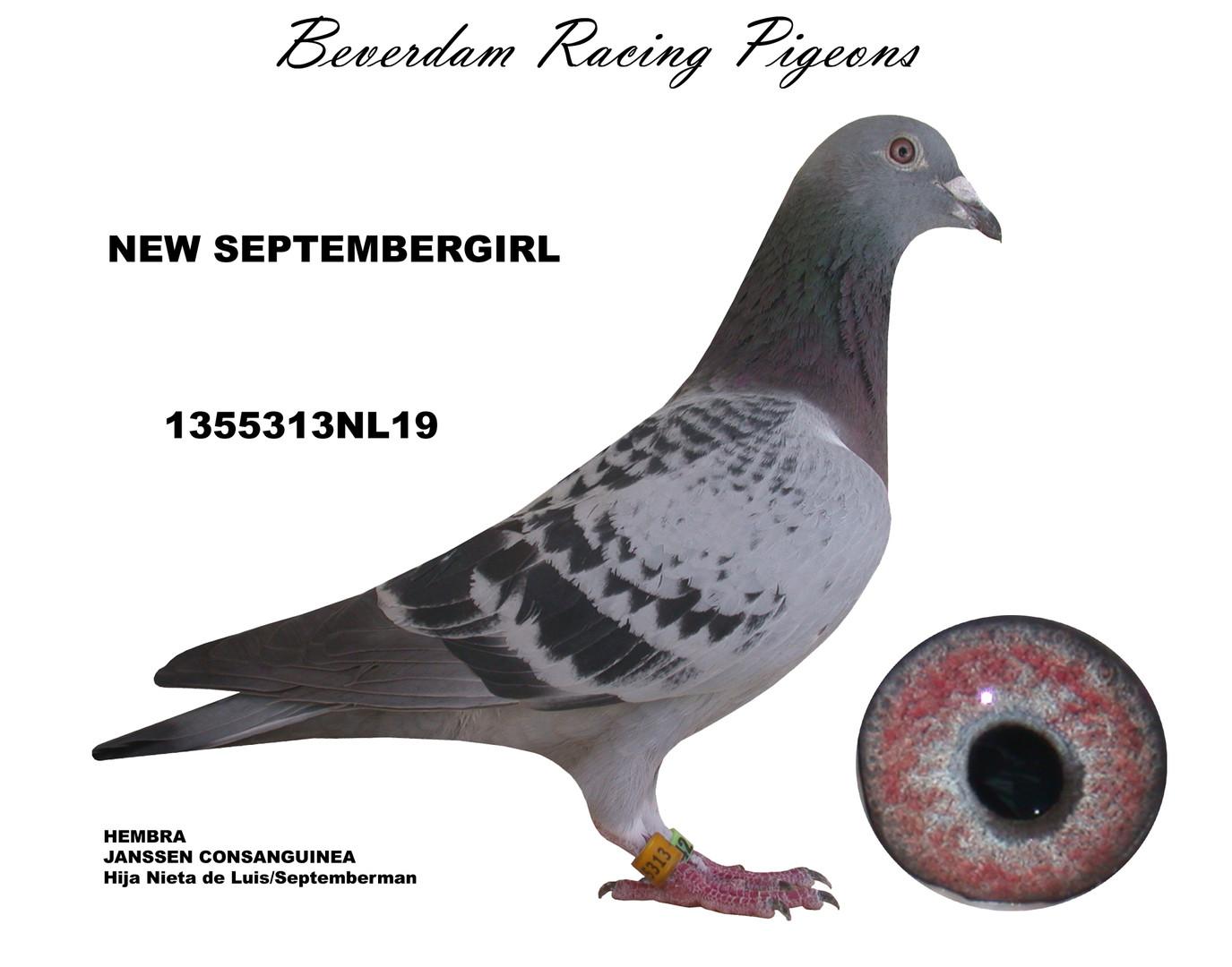 NL19-1355313NL19 term.jpg