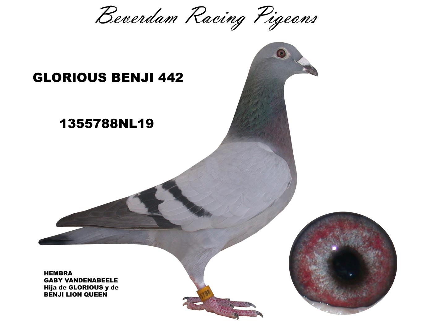 NL19-1355788NL19 term.jpg