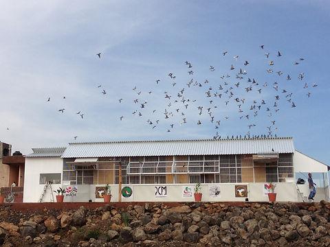 Palomar Campeonato Nal Pichones.JPG