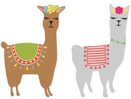 La familia camelidae