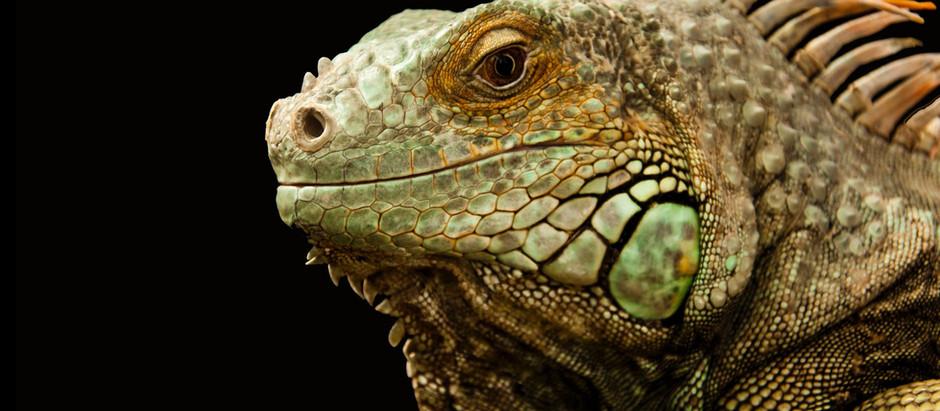 Los Aspirantes: Joaco, le reptil.