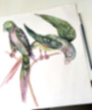 plumage artwork original small.jpg