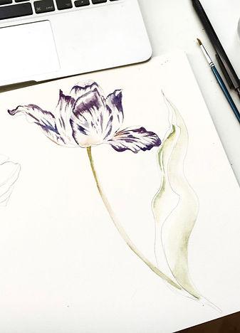 Watercolour tulip.jpg