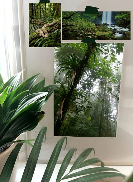 mazon jungle photos.jpg