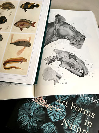 Alice Acreman Scientific illustration bo