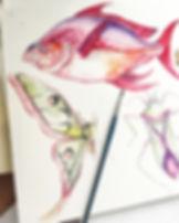 Enticement fish illustration .JPG