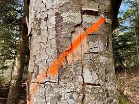 Baum orange.jpg