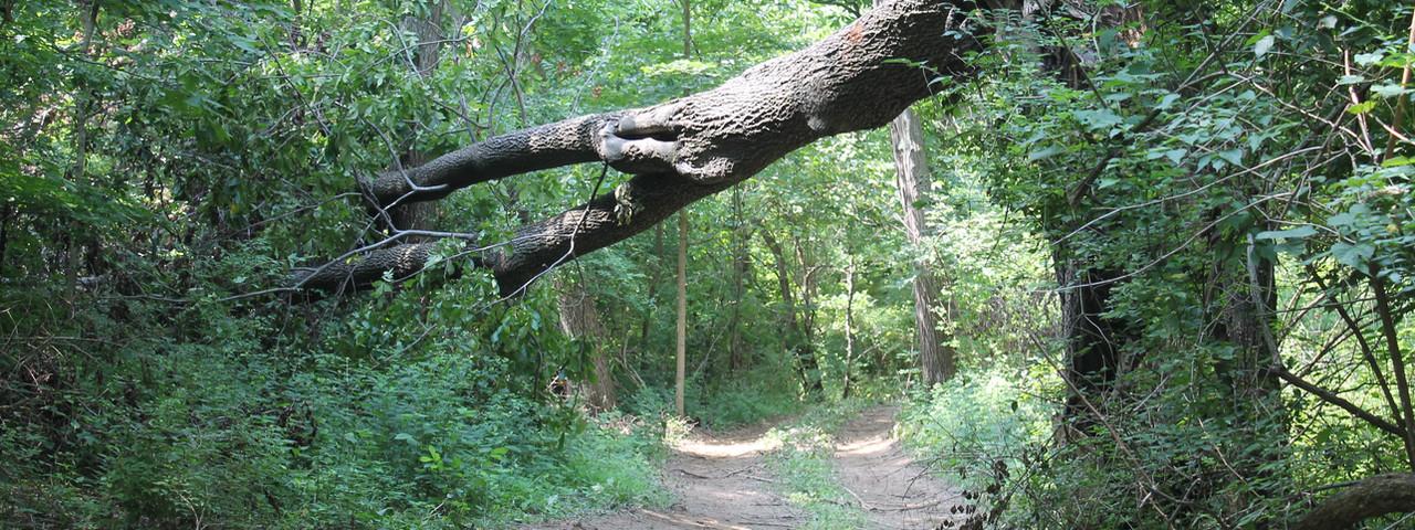 Trails 16.JPG