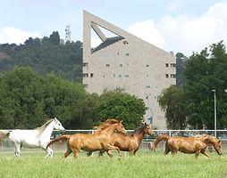 Cal Poly Pomona Horses | cpp.edu