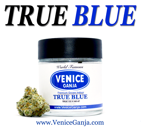 VENICE GANJA True Blue.png