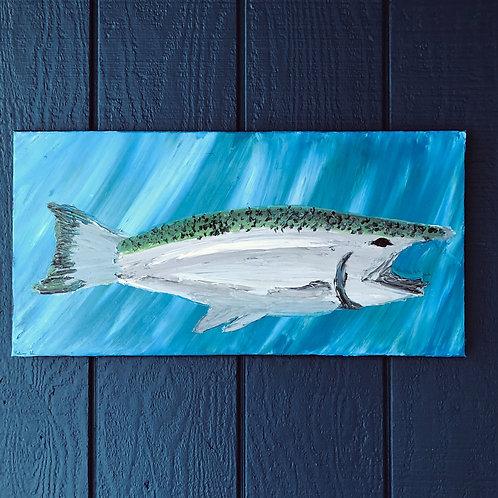Gaping Salmon
