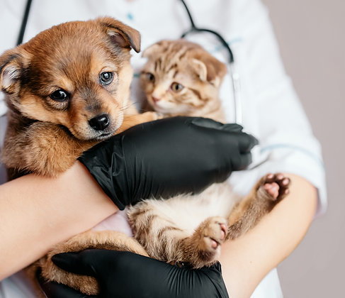 Vacuna antirrábica + consulta a domicilio