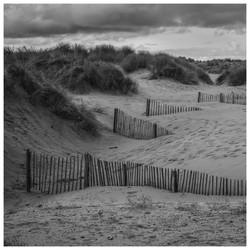 Reclaiming Sand Dunes