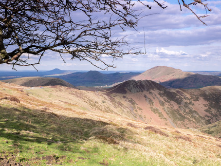 The Low Down on the Uplands