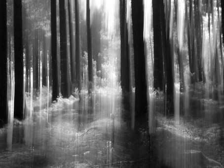 The Haunted Frightened Trees