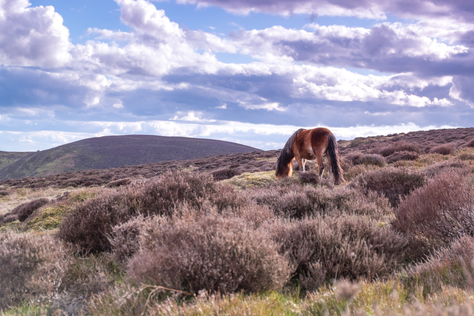 Long Mynd Pony