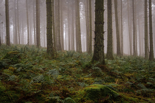 Misty Forest 5