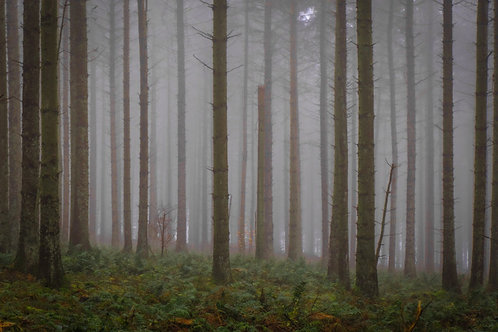 Misty Forest 7