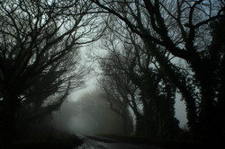 Haunted Frightened Trees