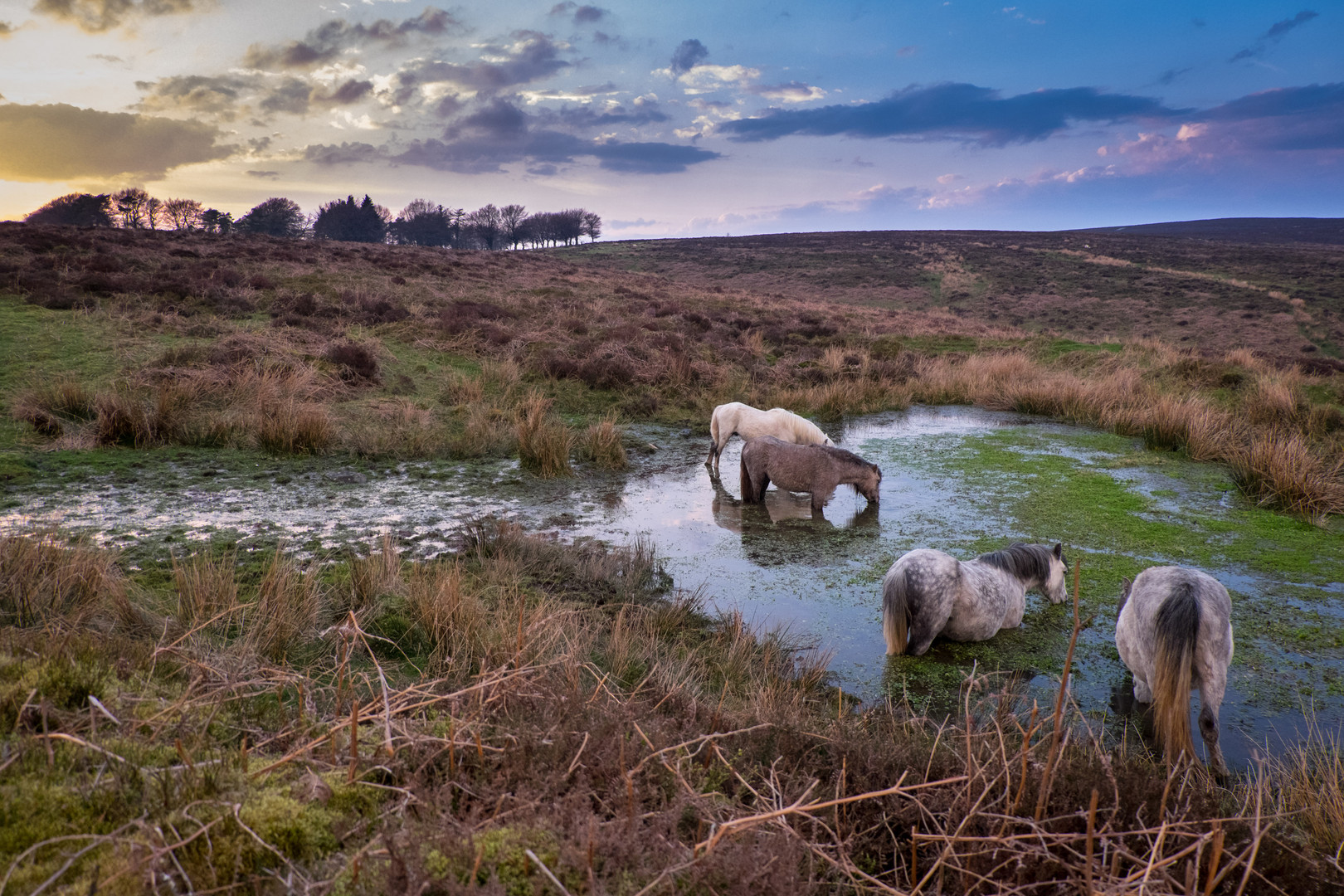 Long Mynd Watering Hole