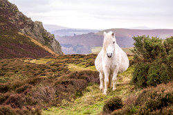 Long Mynd Pony