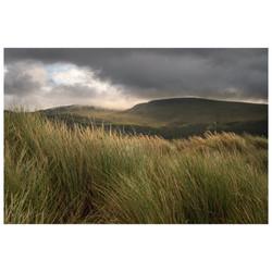 Marram Grass at Abermaw