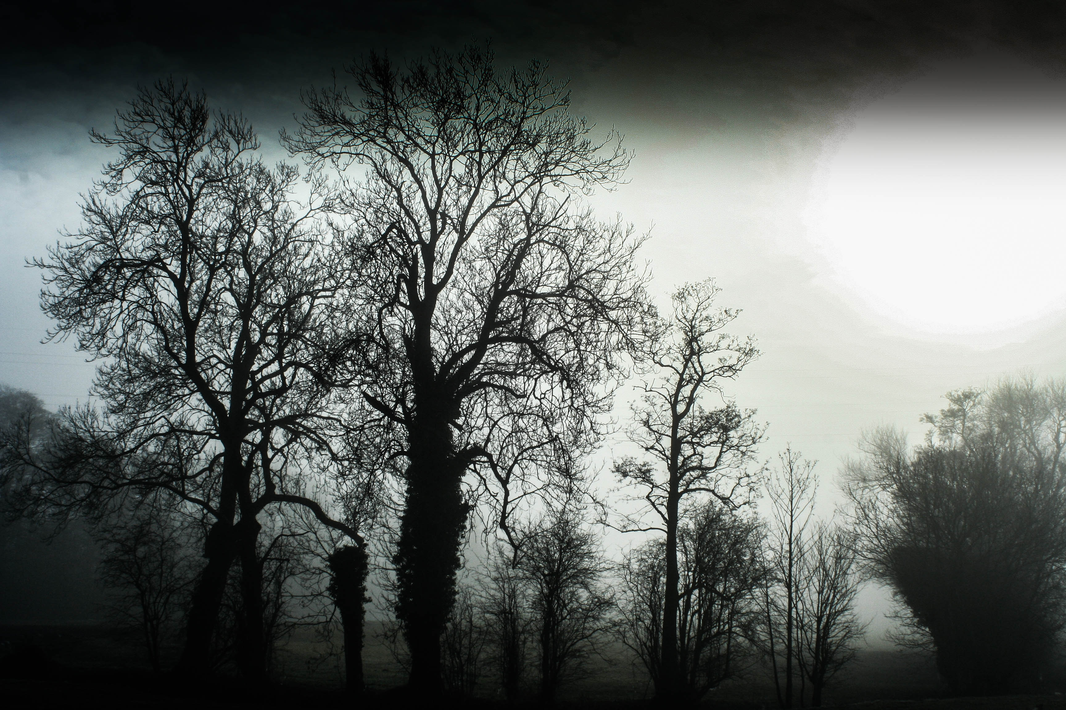 Haunted Frightened Trees