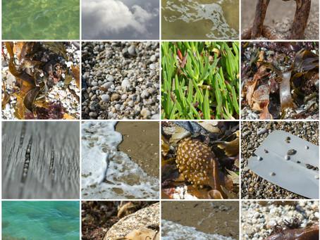 Seaside Elements