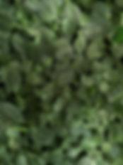 ugur-akdemir-628714-unsplash.jpg