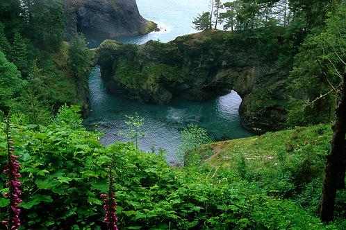 Natural Bridges Cove