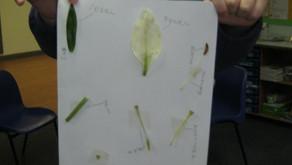 A Scientific look at Plants