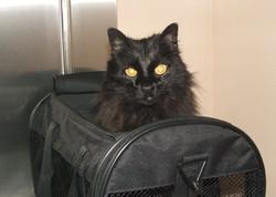 Kitty Zimmerman