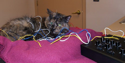 Taffy the cat