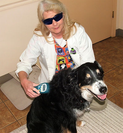 Tate and Dr Judy Laser Therapy