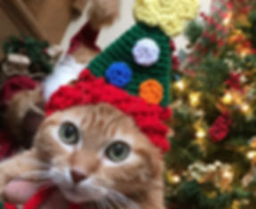 Cat in Christmas Hat