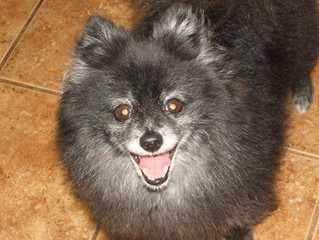Caring for your senior pet