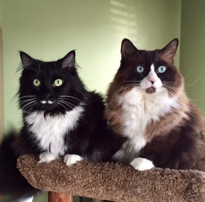 2 gorgeous cats! Bacci and Kitty J.
