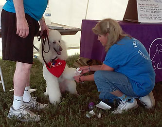 Dr Judy McBeth bandaging Lacey the dog's paw